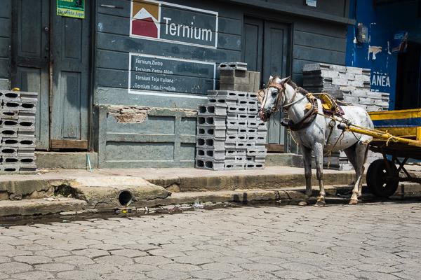 City-Horse @Leòn