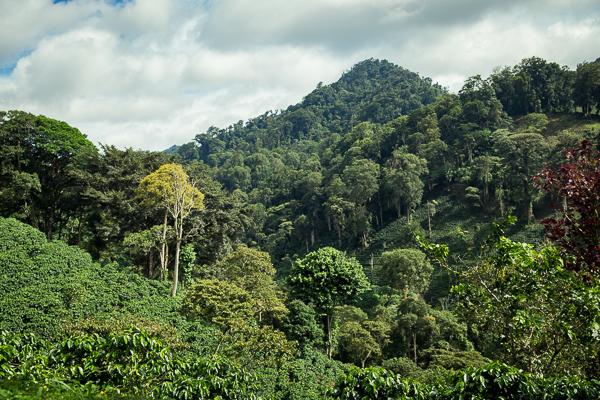 Cloud Forest @ Jinotega