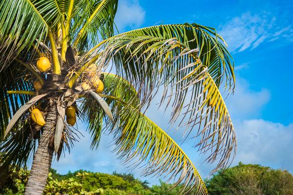 Coconut @El Transito