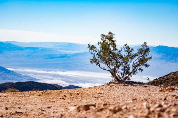 Resisting the dryness @Death Valley